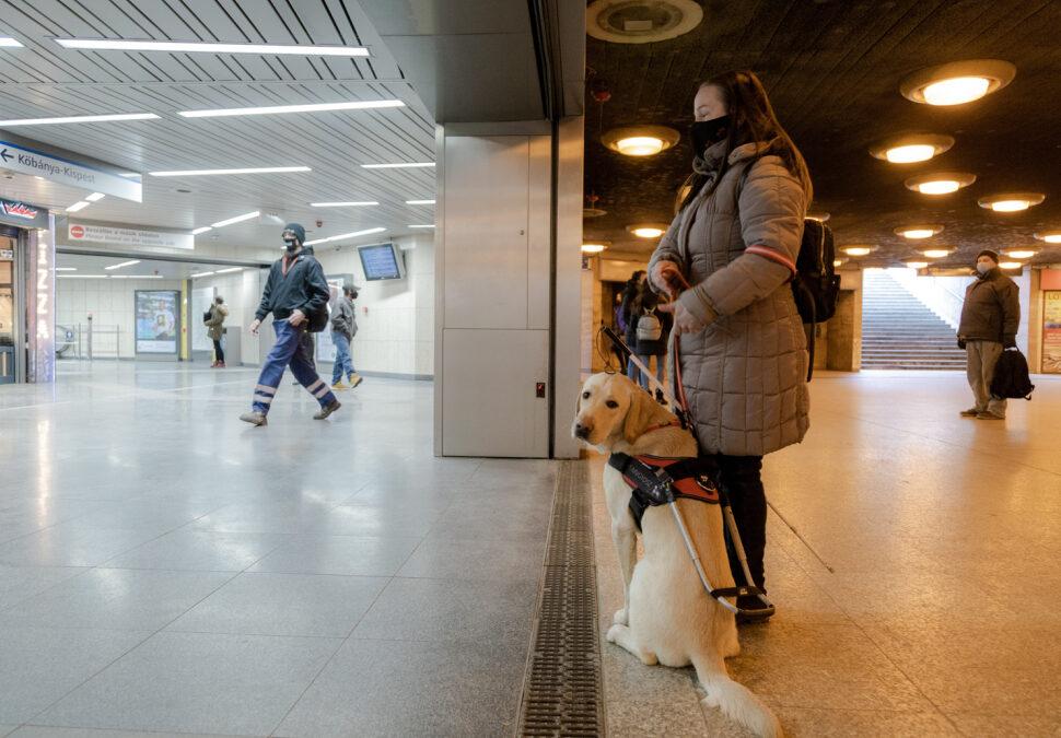 """""""Kutya és gazdája csak egymásra van utalva"""" – képriport a vakvezető kutyák kiképzéséről"""